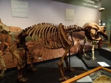 Diprotodon, marsupial géant